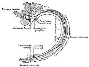 Intercostalneuralgie – Merkmale und Behandlung