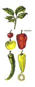 Kleine Gewürzfibel - Paprika