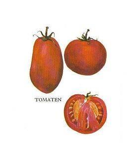Gewürzfibel, Tomate