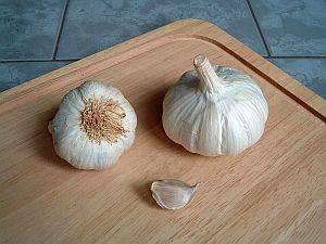 Allium sativum, Knoblauch, Heilmittel