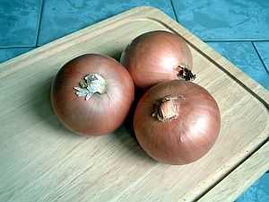 zwiebel, Zwiebel (Allium cepa) – eine der ältesten Kulturpflanzen